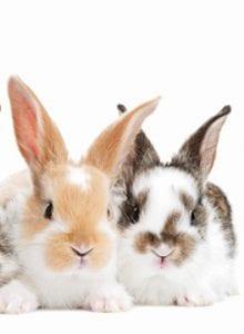 Rabbit awareness week post